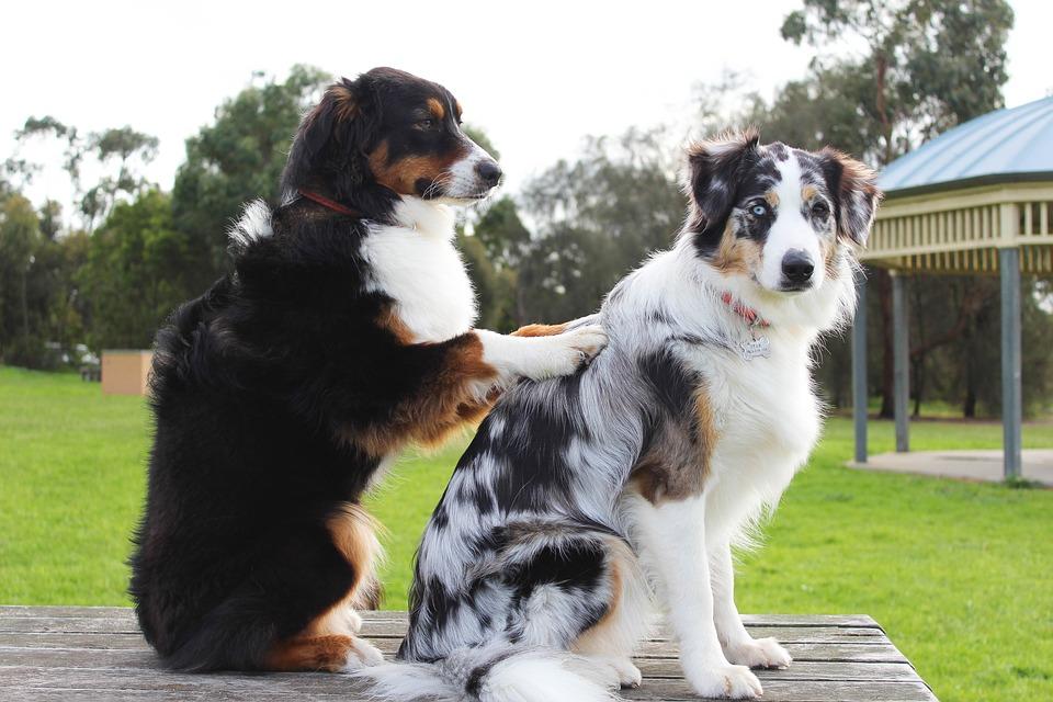 Combattre les tiques pour la santé chien