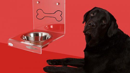 aliments les plus toxiques pour le chien