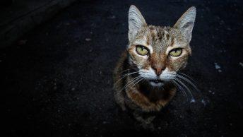 vieil chat
